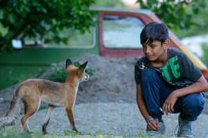 A child encounters a wild fox at the former military barracks which became an emergency arrival centre in Spandau, Berlin.