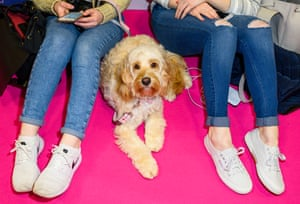 Dog sitting on floor between two girls' legs at Crufts dog show 2019