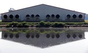 A manure waste pond on a farm in North Carolina