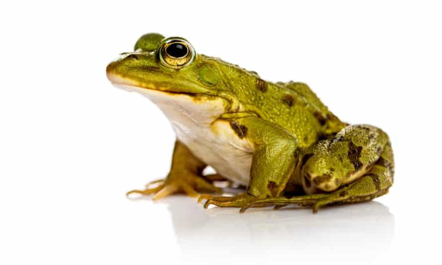 I leap therefore I amphibian.
