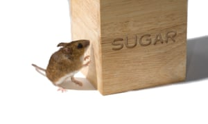 Desperate to kick your sweet tooth? Scientists edge closer to solution.
