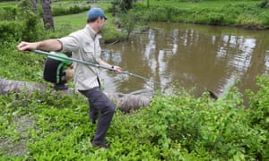 Sam Banks tries to collect DNA samples from a saltwater crocodiles in Timor-Leste