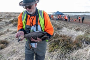 Campaigner Manfred Zabinskas holds a Pacific black duck that was shot and rescued but needed to be euthanised
