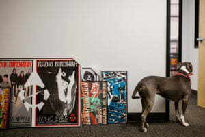 Gwendolyn, the plant's faithful watchdog, keeping an eye on some posters in need of hanging