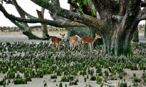 Wild deer in the Sundarbans