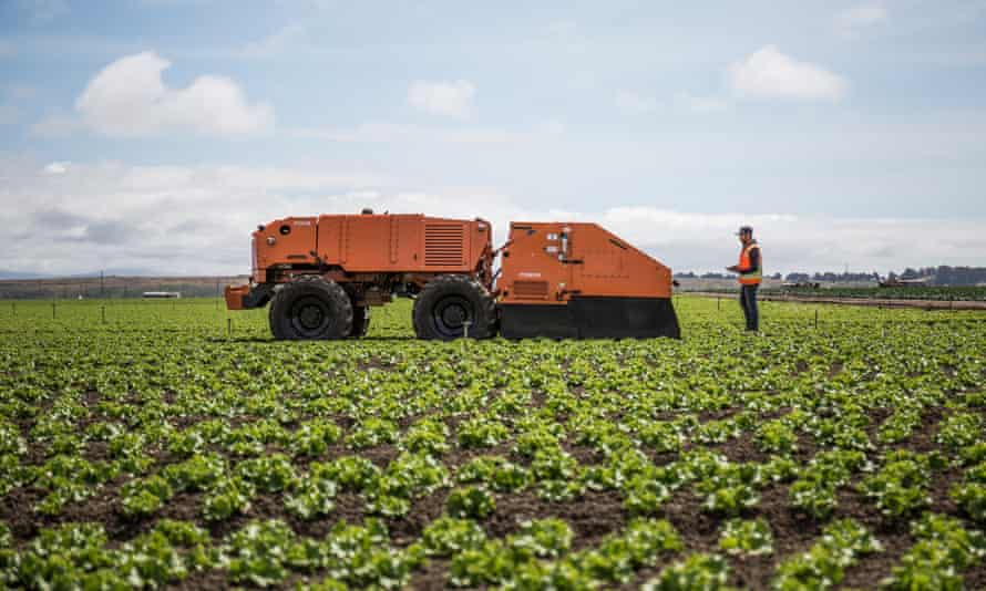 Farmwise weeding robot in a field of crops