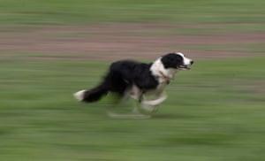 Ritchies Finn begins his run