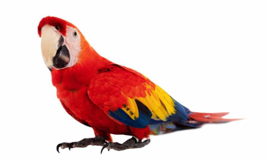 Never tickle a parrot down its back or on, or under, its wings ...