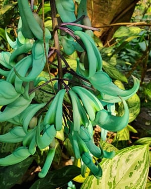 A jade vine in the rainforest biome.