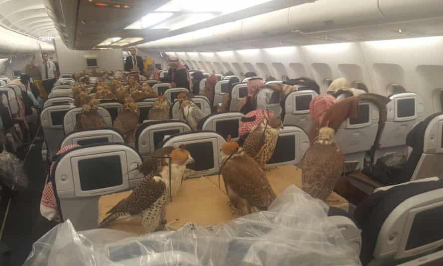 falcon hawks Jeddah