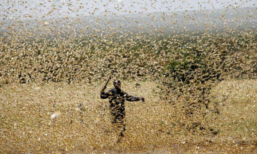 A man attempts to fend off a swarm of desert locusts at a ranch near the town on Nanyuki in Kenya's Laikipia county