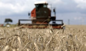 A combine harvester cuts through a wheat field in central Italy