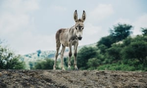 Donkey on a hill in Pakistan.