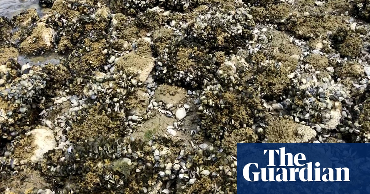 Extreme heat cooks mussels in their shells on Canada coast – video