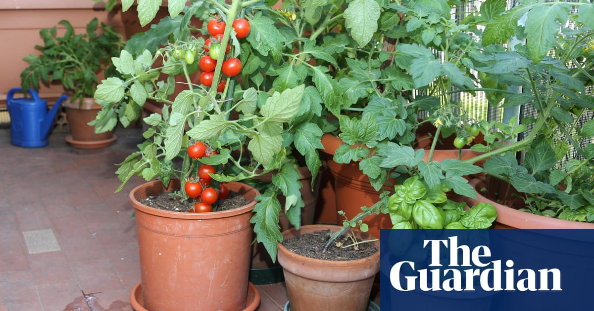 How To Grow Vegetables On A Balcony Alys Fowler Life And Style