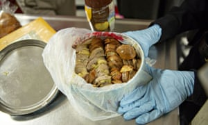 An agriculture canine specialist with the U.S. Department of Homeland Security inspects confiscated food items at the U.S. Customs and Border Protection Grinder Room at O???Hare International Airport (ORD) in Chicago, Illinois, U.S., on Monday, Nov. 19, 2018.