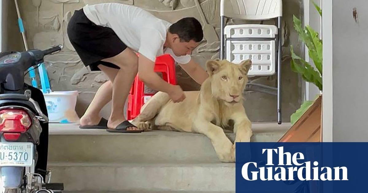 Pet lion seized from home in Cambodia capital after appearance on TikTok