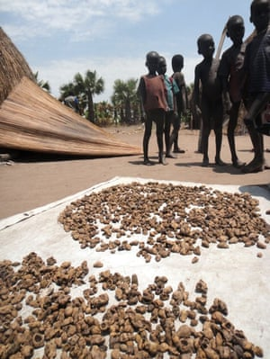 Hunger and malnutrition are widespread. People are surviving off dried water lily bulbs; here, they are spread in the midday sun to dry.
