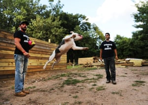 New York, US Michael Favor (left) plays with one of his dogs at Pitbulls and Addicts, a dog rescue centre on Staten Island that aims to help both recovering drug addicts and stray animals
