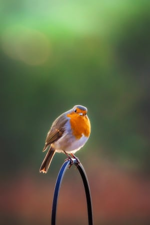 Nicola Munro from Aberdeenshire won first prize in the wildlife category with her photograph of a Robin entitled You Lookin' at Me?