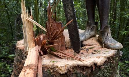 Logging in Papua New Guinea
