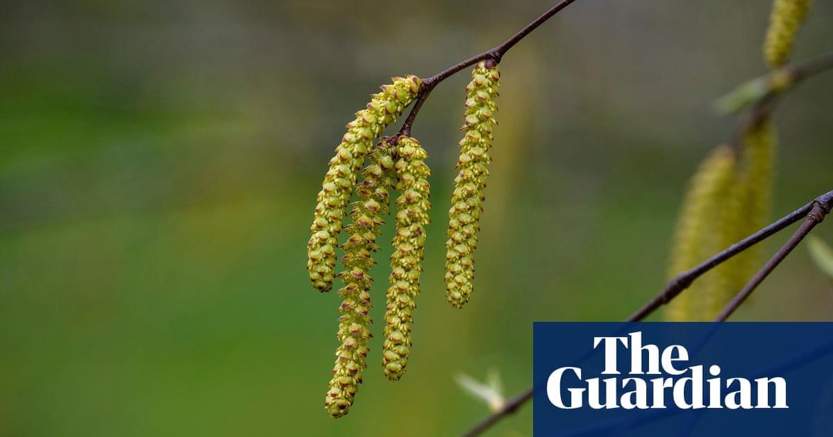 Country diary: the patient birch waits for us