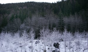 Romania contains Europe's last virgin forest, home to bison, lynx and bears.