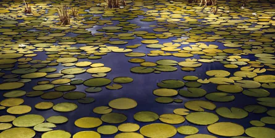 Pond, 2020 by Thomas Demand.