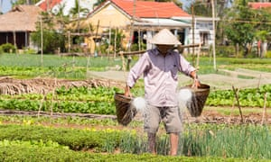 Watering at the Tra Que Vegetable Village, Hoi An, Quang Nam province, Vietnam.