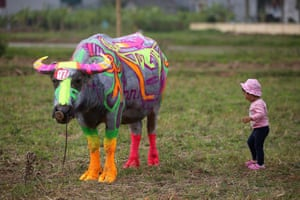 Ha Nam, Vietnam: A girl stands next to a painted buffalo