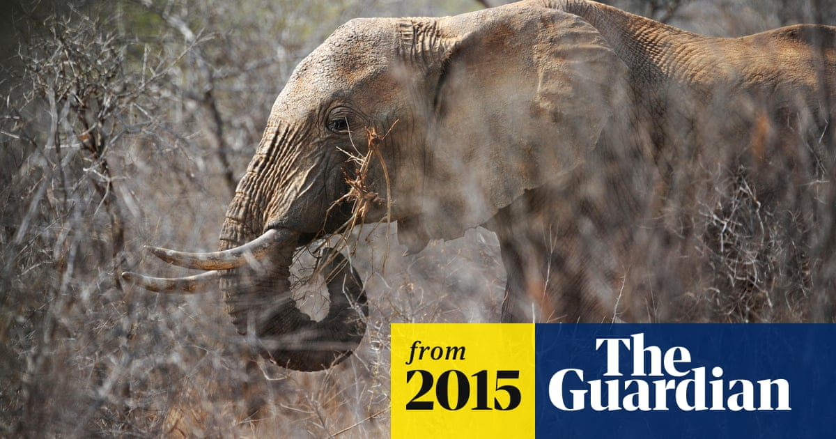 8da86b850 China and US agree on ivory ban in bid to end illegal trade globally ...