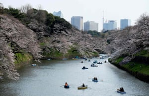 Visitors row boats past cherry blossoms in Tokyo
