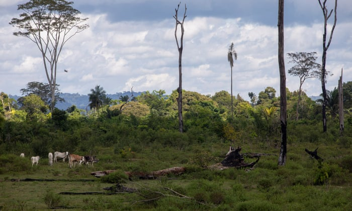 Revealed: rampant deforestation of Amazon driven by global