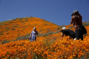The fields of poppies in Lake Elsinore attracted crowds including Instagram influencers and even celebrities.