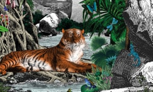 A detail from Into the Jungle by Katherine Rundell, illustrated by Kristjana S Williams.