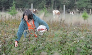 A woman grows raspberries to use at home in her indigenous community as they isolate in Tirúa, Chile, on 7 May.