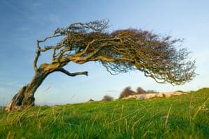A hawthorn tree.