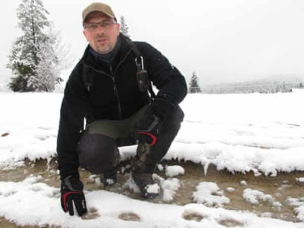 Biologist Robert Mysłajek says snow is nature's helper, making the detection of wolf tracks much easier for scientists.