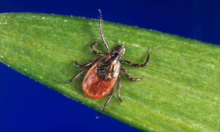 'Check yourself if you are out somewhere where there are likely to be ticks': a deer tick on a plant.