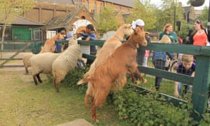 Kids enjoying an animal petting session at Vauxhall City Farm, London, UK.