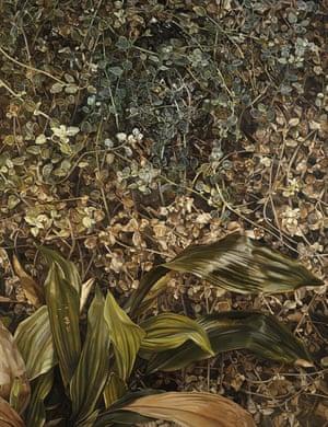 Two Plants, 1977-80, byLucian Freud.