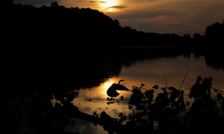 A great blue heron is silhouetted by the reflection of the rising sun at Lake Johnson Park in Raleigh.