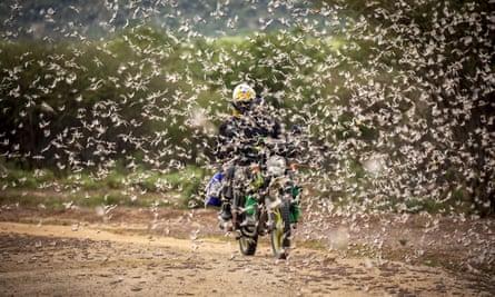 A swarm of desert locusts in Kipsing