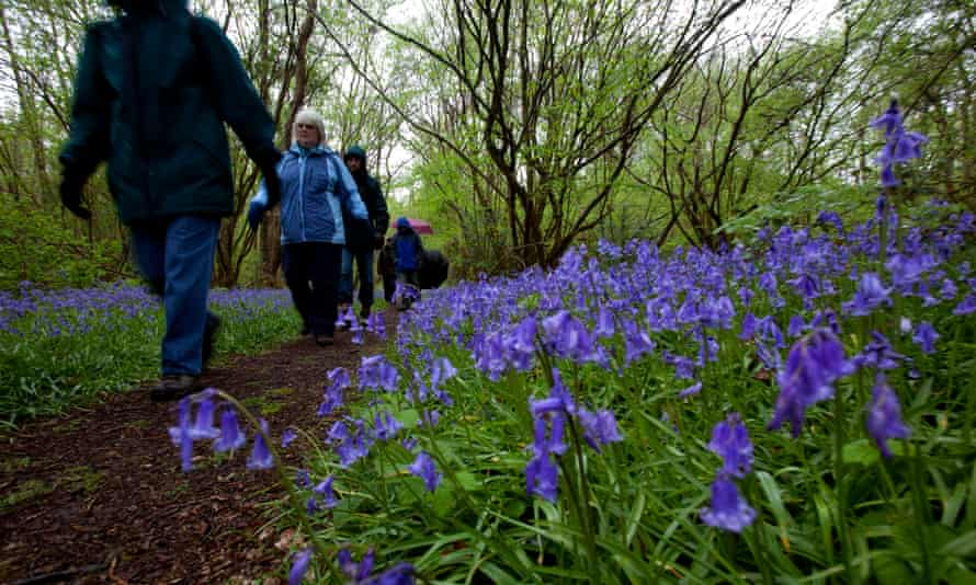 The Dawn chorus (in the rain), at Norfolk Wildlife Trust's Foxley Wood reserve, Norfolk