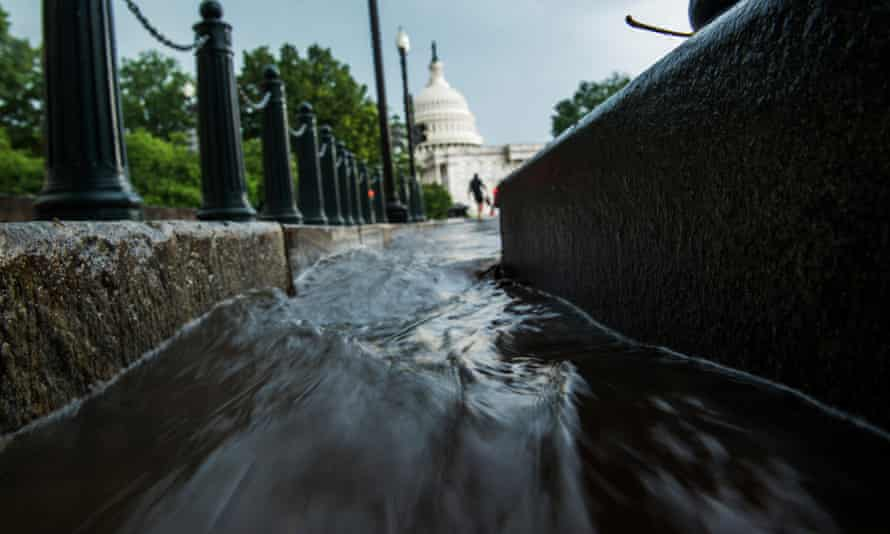 More trees and plants will help to soak up stormwater from heavy downpours.