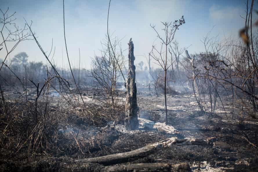Destruction in the Chaco forest