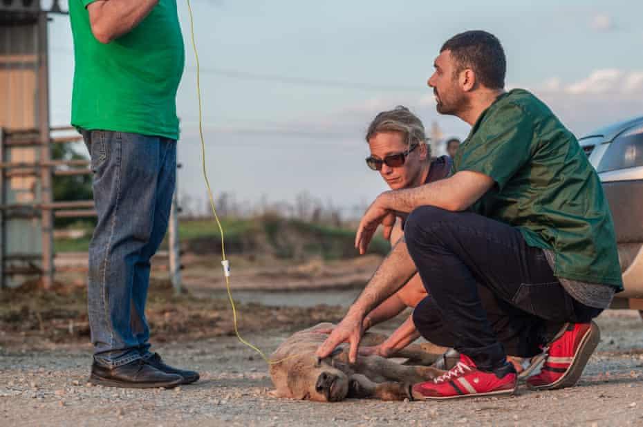 Lesley Moffat and a vet, Ibrahim Sarigöz, examine a calf.