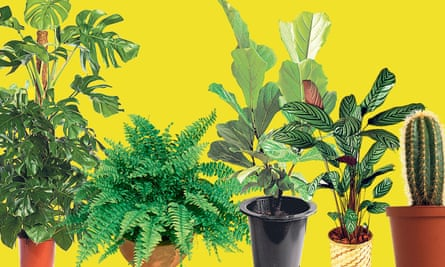 Left to right: swiss cheese, Boston fern, fiddle leaf fig, prayer plant and cactus.