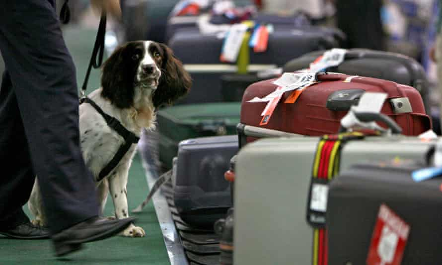 A historical picture of a sniffer dog  at Shanghai's Pudong airport