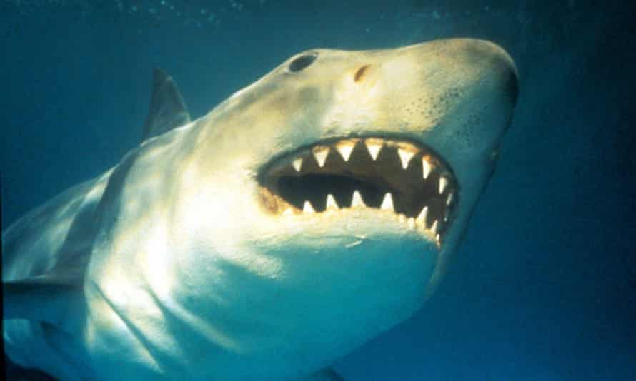 Death is imminent, and all we can do is wait … Jaws.